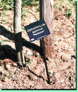 Tree Define